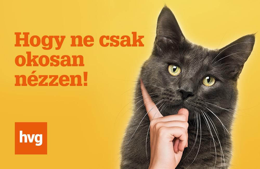 HVG efiz macskás/kutyás